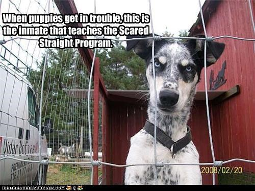 When puppies get in trouble, this is the inmate that teaches the Scared Straight Program.