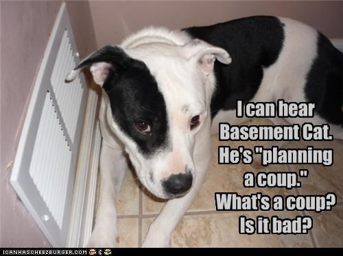 """I can hear Basement Cat.   He's """"planning a coup."""" What's a coup?  Is it bad?"""