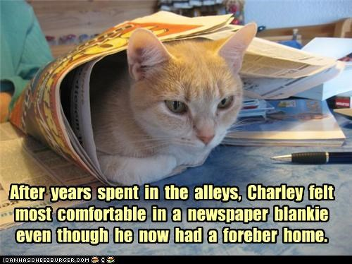 alleys,blanket,blankie,caption,captioned,cat,comfortable,conditioning,forever home,home,life,newspaper,preference,sleeping,stray,years