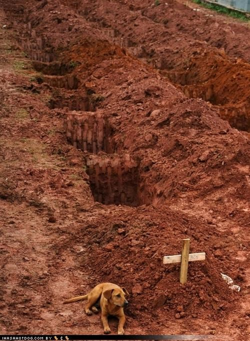 Goggie Waits for Owner at Grave Site