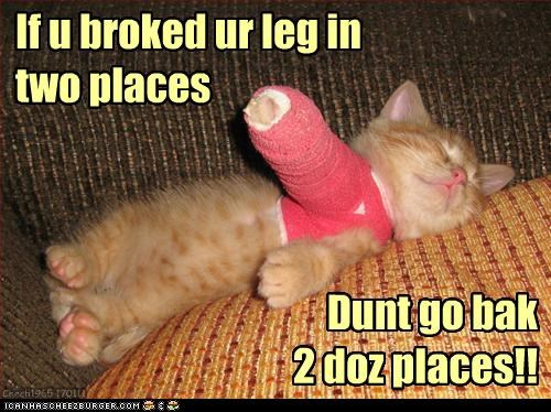 advice,advising,broken,caption,captioned,cast,cat,healing,injury,kitten,literalism,sleeping,tabby,wisdom