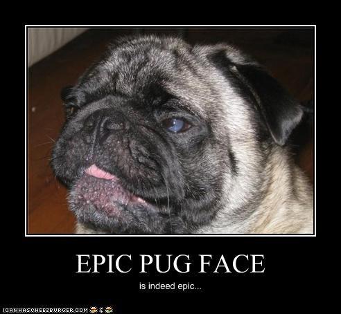 EPIC PUG FACE