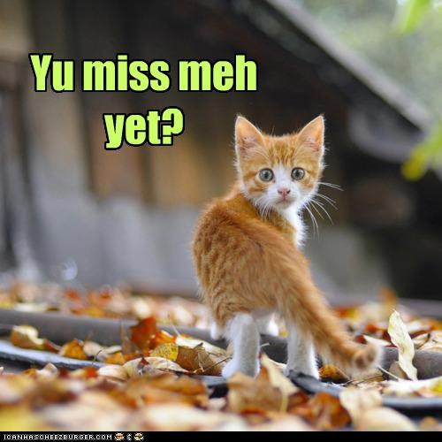 away,caption,captioned,cat,checking,kitten,leaving,looking back,miss,missing,question,tabby,walking,yet