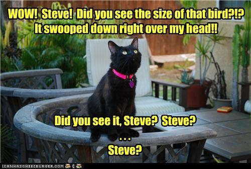 afraid,Awkward,bird,caption,captioned,cat,food,noms,prey,question,reply,silence,size,stalking