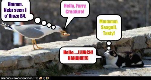 Dat'z 1 Curious Seagull!