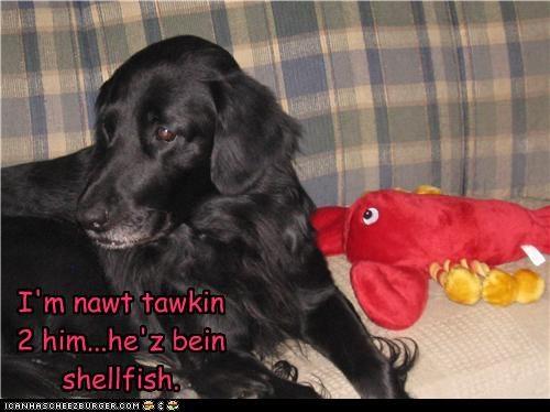 grudge,labrador,not,pun,rhyme,Sad,selfish,shellfish,talking