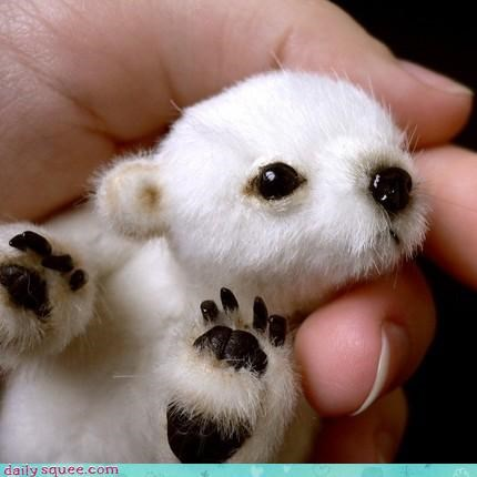 Acting Like Animals: NEWBORN POLAR BEAR. REPEAT. NEWBORN POLAR BEAR.