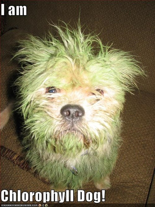 I am  Chlorophyll Dog!