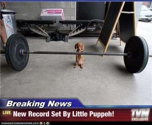 Breaking News - New Record Set By Little Puppeh!