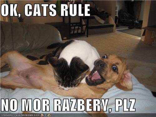 OK, CATS RULE  NO MOR RAZBERY, PLZ