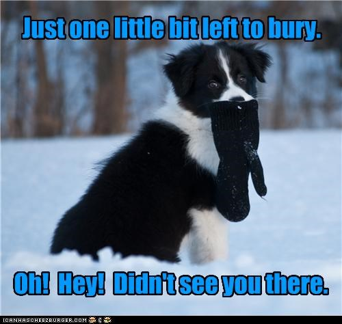 bit,border collie,bury,burying,glove,left,noticing,one,piece,puppy,realization,snow,talking,thinking