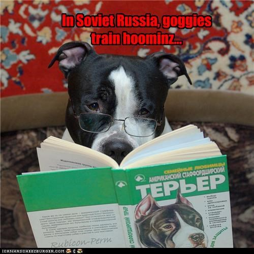 book,glasses,humans,pit bull,pitbull,reading,reversal,russia,soviet,Soviet Russia,switch,training