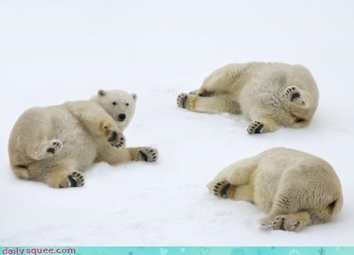 Acting Like Animals: Polar Bear Playtime