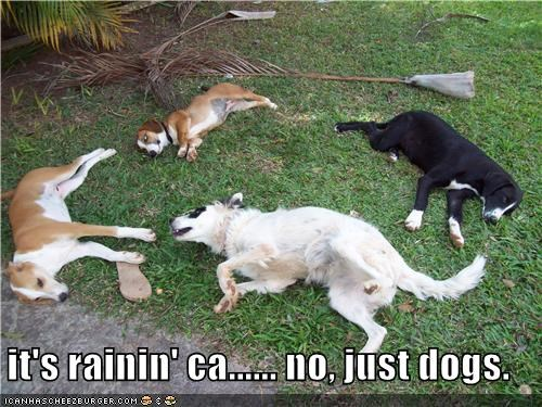 it's rainin' ca...... no, just dogs.
