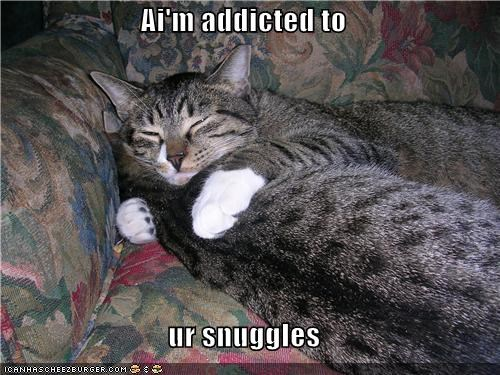 addicted,caption,captioned,cat,Cats,friends,friendship,Hall of Fame,love,snuggles,snuggling,statement