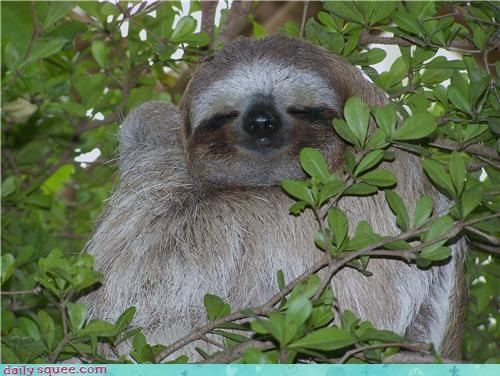 oh hai,sloth,smile,tree