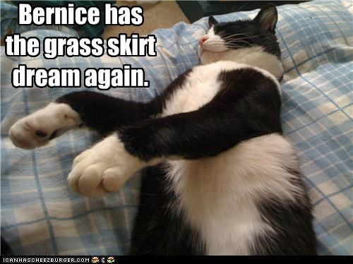 asleep,caption,captioned,cat,dancing,dream,dreaming,grass skirt,hula,sleeping