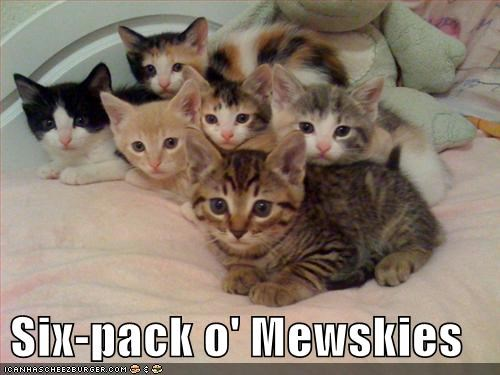 Six-pack o' Mewskies