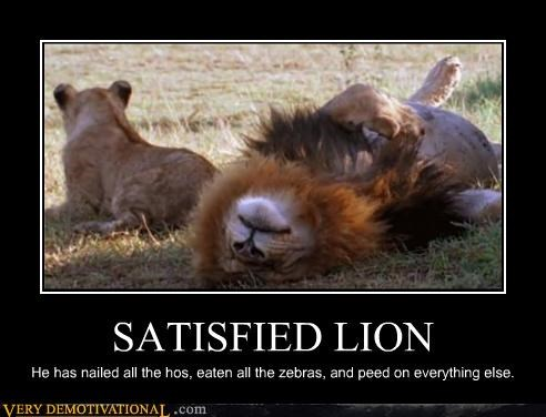 SATISFIED LION