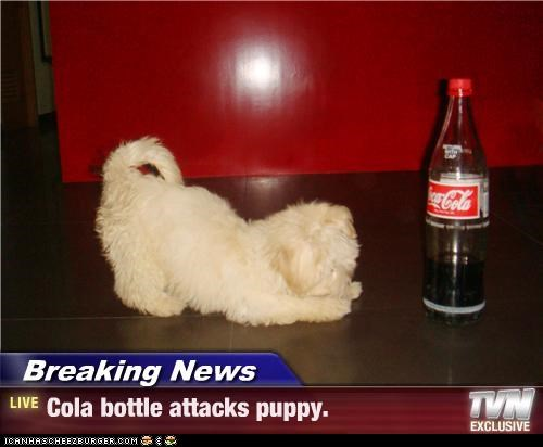 Breaking News - Cola bottle attacks puppy.