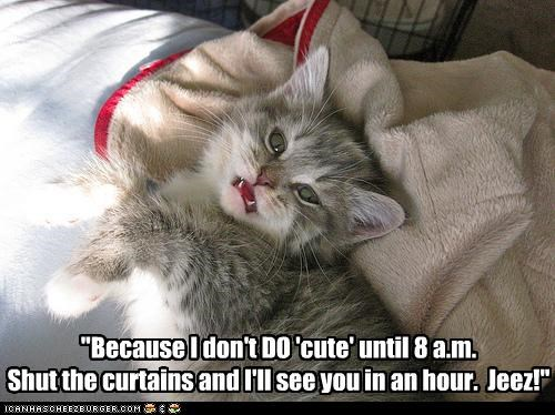 """Because I don't DO 'cute' until 8 a.m. Shut the curtains and I'll see you in an hour.  Jeez!"""