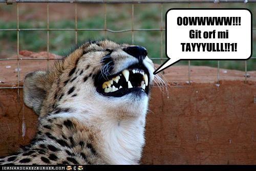 OOWWWWW!!! Git orf mi TAYYYULLL!!1!