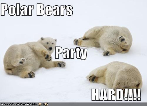 Polar Bears Party  HARD!!!!