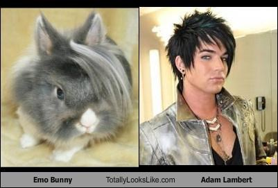 Emo Bunny Totally Looks Like Adam Lambert