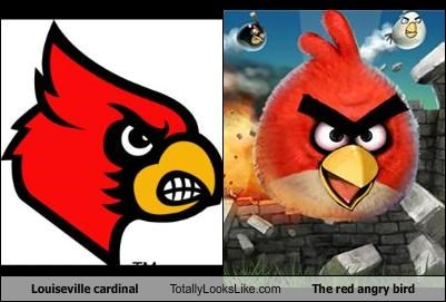Louiseville cardinal Totally Looks Like The red angry bird