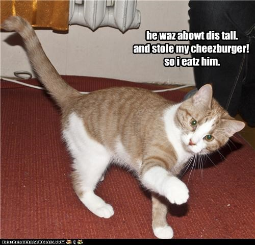 i stole a cheezburger
