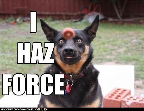critters,dogs,donut,force,head,lawn,star wars