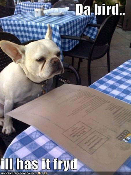 bird,choice,food,french bulldogs,fried,menu,ordering,restaurant,selection