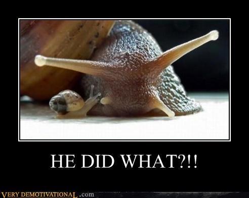 secrets,what,snail