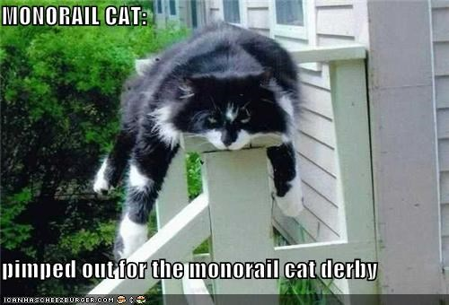 MONORAIL CAT:  pimped out for the monorail cat derby