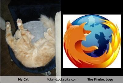 My Cat Totally Looks Like The Firefox Logo