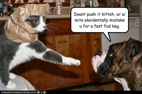 Doant push it kitteh, or ai mite aksidentally mistake u for a fast fud bag.