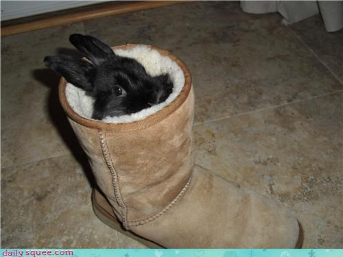 Bun in a Boot