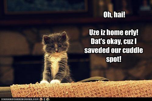 Oh, hai!   Uze iz home erly!  Dat's okay, cuz I saveded our cuddle spot!