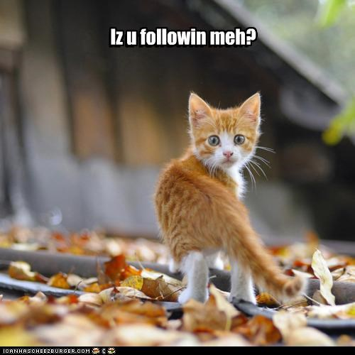 Iz u followin meh?