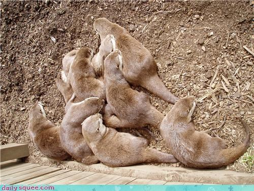 Daily Squee: Pile of Otters