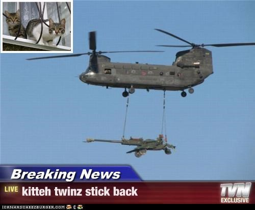 Breaking News - kitteh twinz stick back