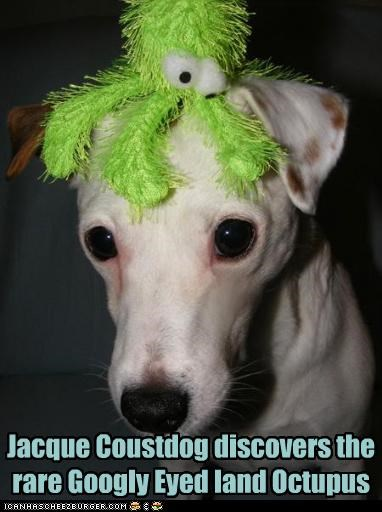 discover,discovering,discovery,explorer,jacques cousteau,land,new,octopus,rare,species,stuffed animal,whippet