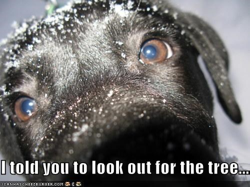 accident,careless,close up,human,ignorant,injured,injury,labrador,look out,puppy,snow,told you so,tree
