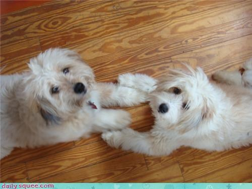 dogs,floor,friends,hands,paws,pets,reader squees