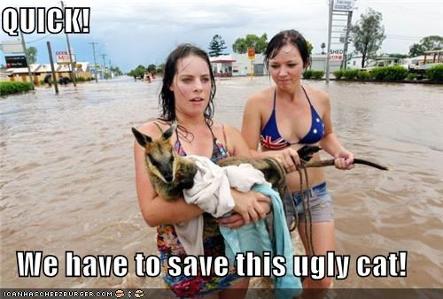 animals,brisbane flood,flood,flooding,girls,rescue,save,wallaby,water