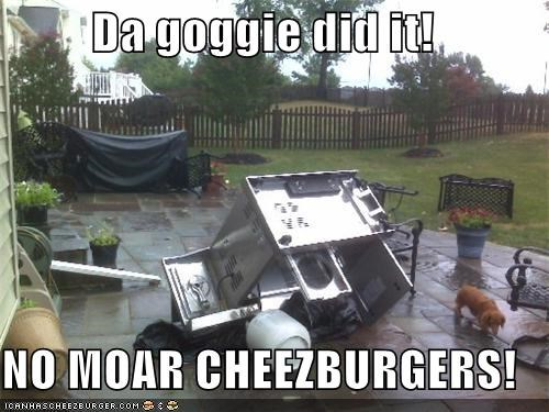Da goggie did it!  NO MOAR CHEEZBURGERS!