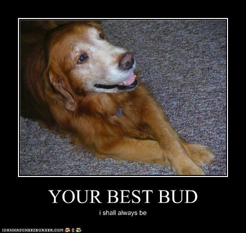 YOUR BEST BUD