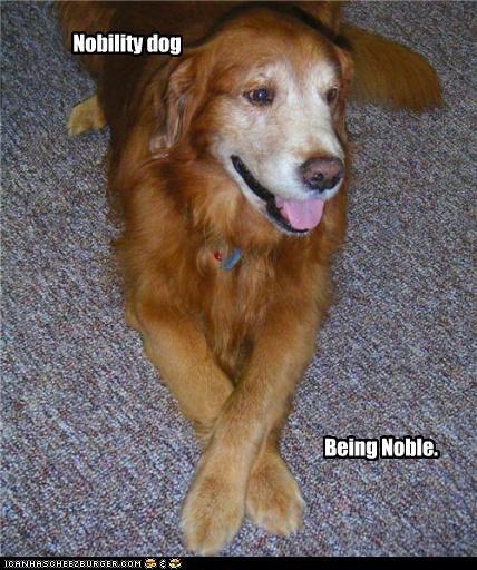 Nobility dog