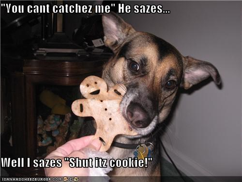 anatolian shepherd,cookies,eating,gingerbread,gingerbread cookie,mixed breed,noms,saying,shut it,threat