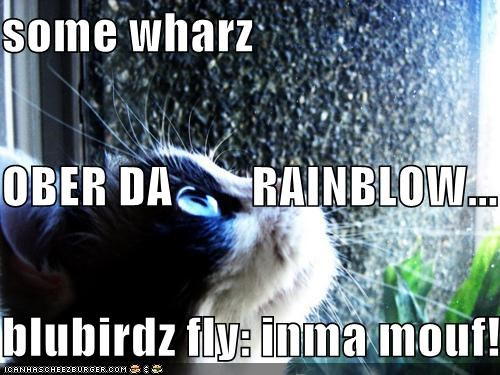 some wharz OBER DA        RAINBLOW... blubirdz fly: inma mouf!